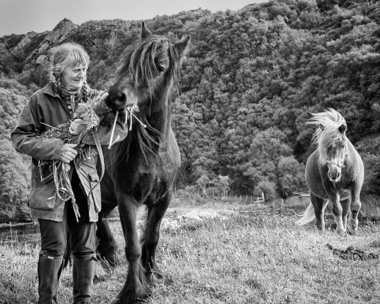 anna and her horses