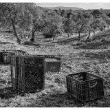 olive picker iv