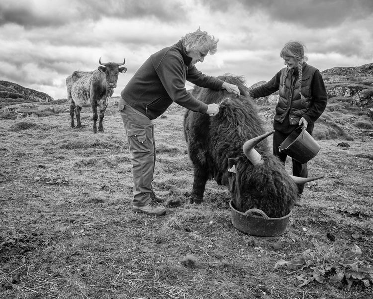crofting in assynt