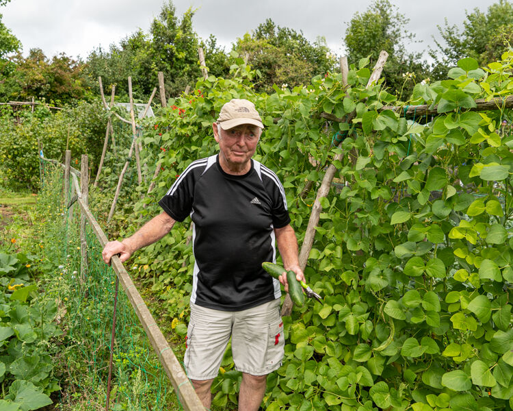dave - allotment holder