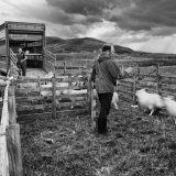 jimmy and clachtoll crofters