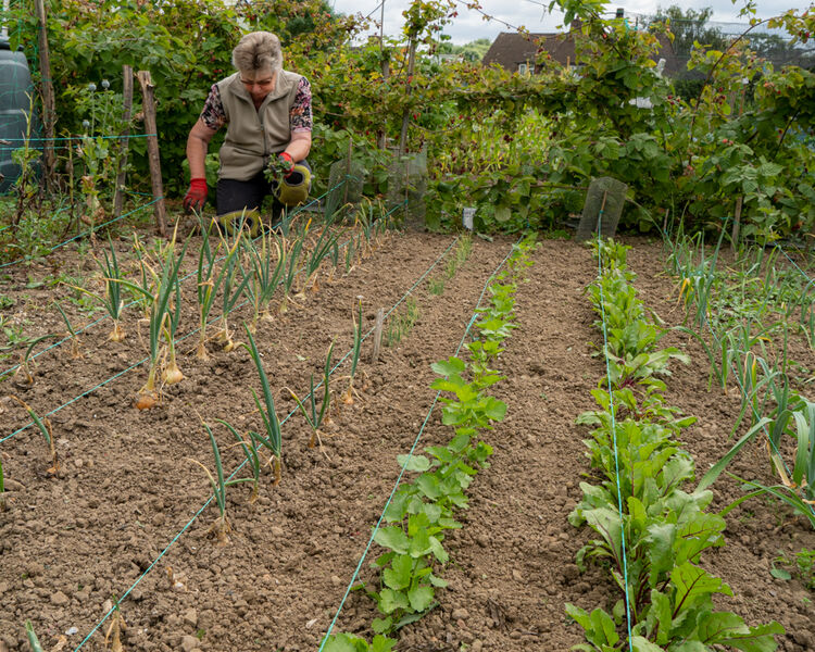 joyce - allotment holder