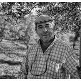 olive picker iii