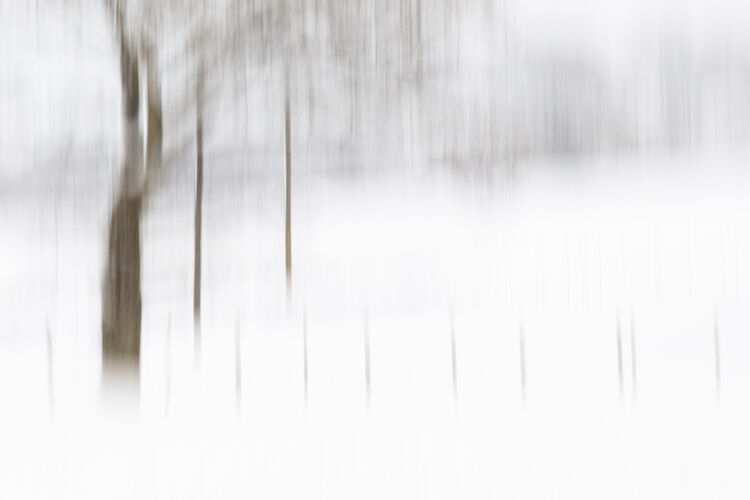 trees and snow 3