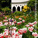 Rococo Blooms