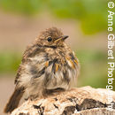 All Fluffed Up