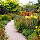 Wander Through The Hot Garden
