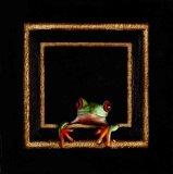 Tiny Frog 17