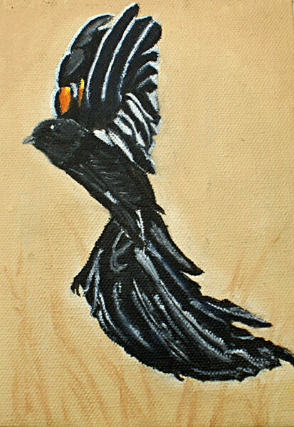 blackie, oil on board, 13cm x 18cm
