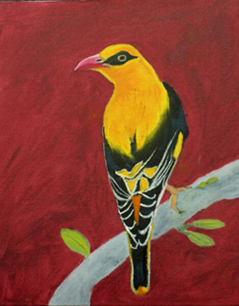golden oriole, oil on board, 20cm x 25cm