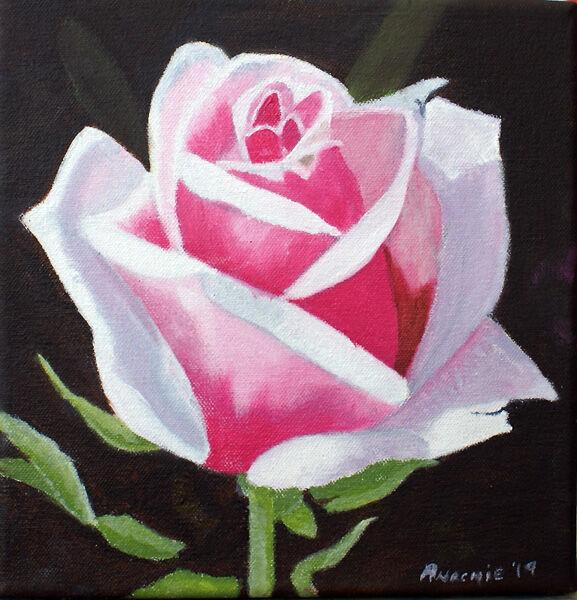 pink rose, oil on canvas, 20cm x 20cm