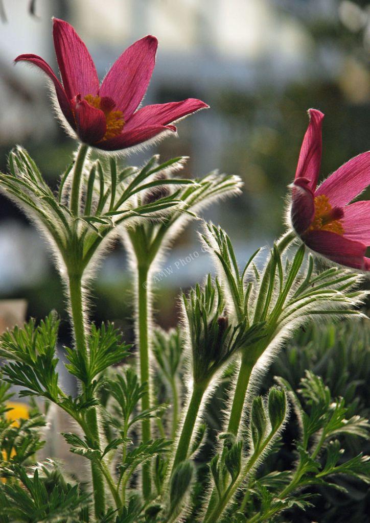 Herb Farm, Sonning Common