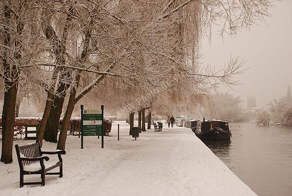 Meadows Winter