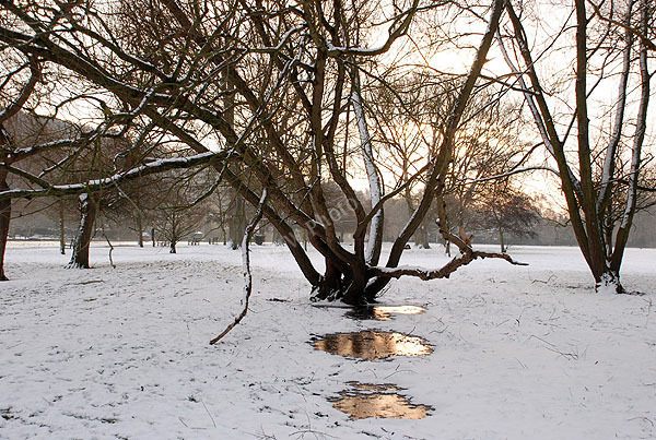 Snowy Meadows