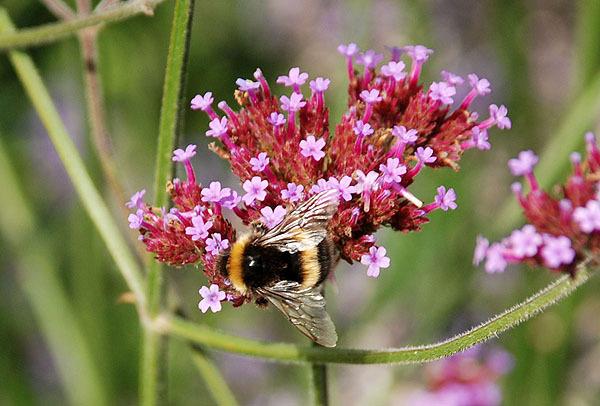 Sweet Nectar2