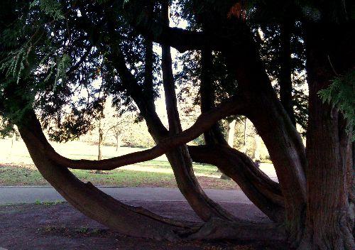 Multiple trunks