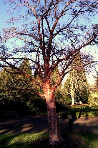 Bare branches in winter sunshine