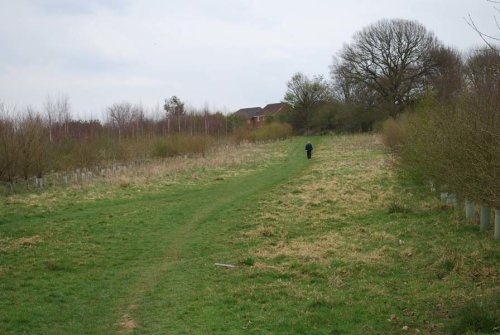 Looking up the meadow before planting