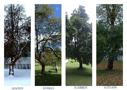 Four seasons of the Black Mulberry