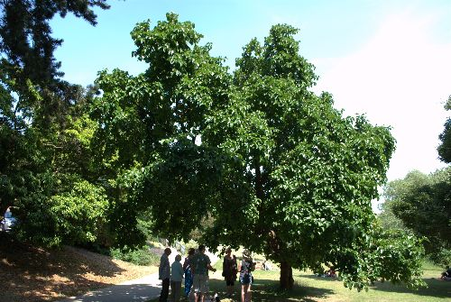 Summer talk under Black Mulberry