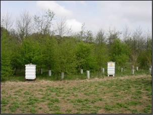 Two beehives were placed on the site.