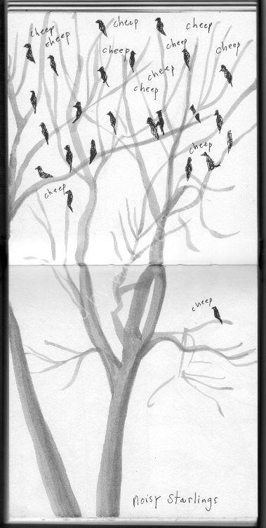 Noisy Starlings