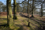Kings Wood