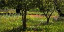 Flowers under fruit trees