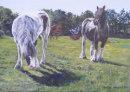 Horses in Aughton, Lancashire