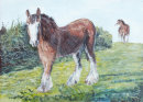 Shire Horses in Lancashire