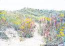 Ainsdale Dunes Trail b