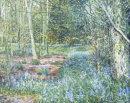 Spring Flower Woods 2