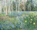 Spring Flower Woods