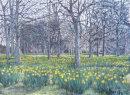 Sefton Park Dafodills