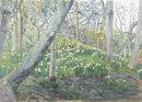 Hesketh Park Daffodils