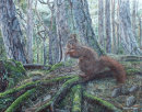 Red Squirrel Perched On Tree Roots
