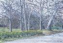 Sefton Park Daffodils Back