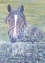 Yorkshire Horse