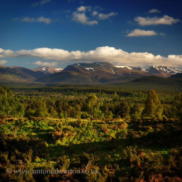 Abernethy Forest, Strath Nethy and Cairn Gorm