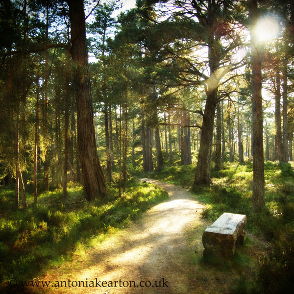 Bench, Dell Woods