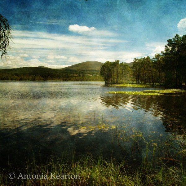 Summer, Loch Garten