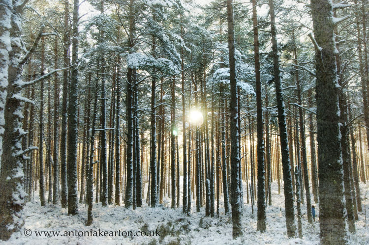 Dell Woods in winter, 1