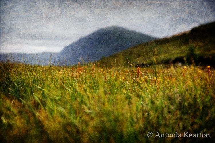 Grass, Glen Einich
