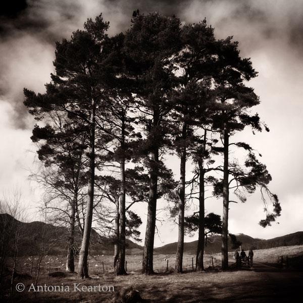 Pines, Glen Banchor