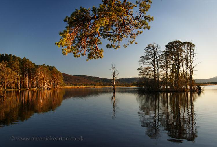 Summer's Evening, Loch Mallachie