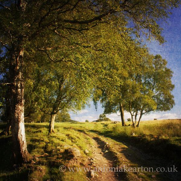 Path, by Lurg