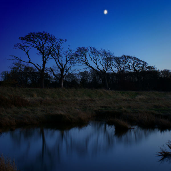 Trees with Moon, Aberlady