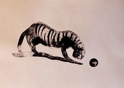 Le chat tigré