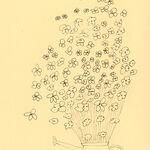 floral drawing minimal minimalist painting sketch roses