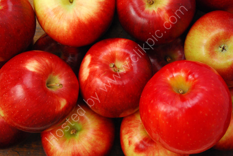 CLOSE VIEW OF APPLES